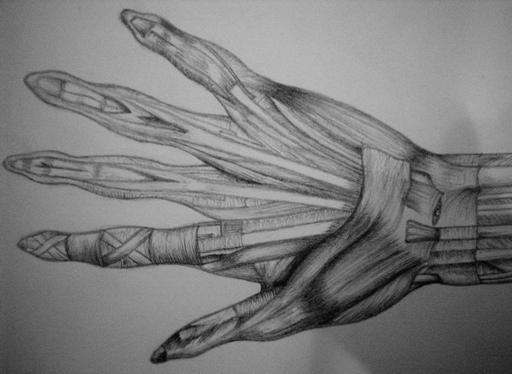 Skinless Hand