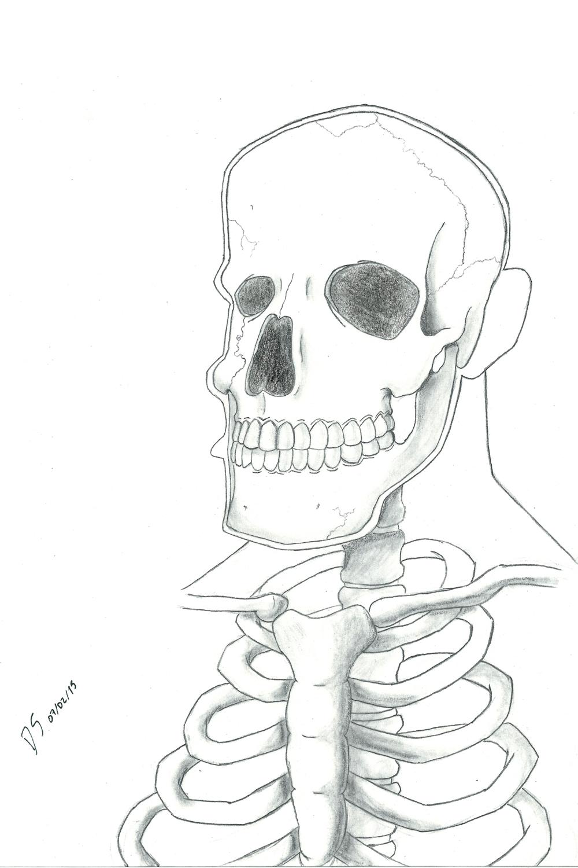 a drawing anatomy