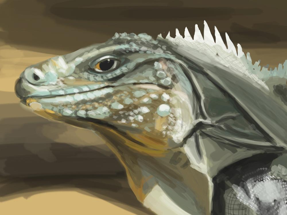 Iguana study