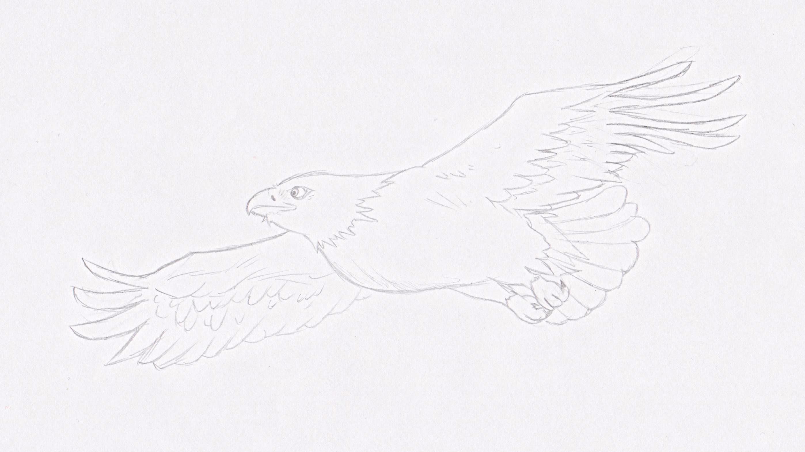 An Eagle!