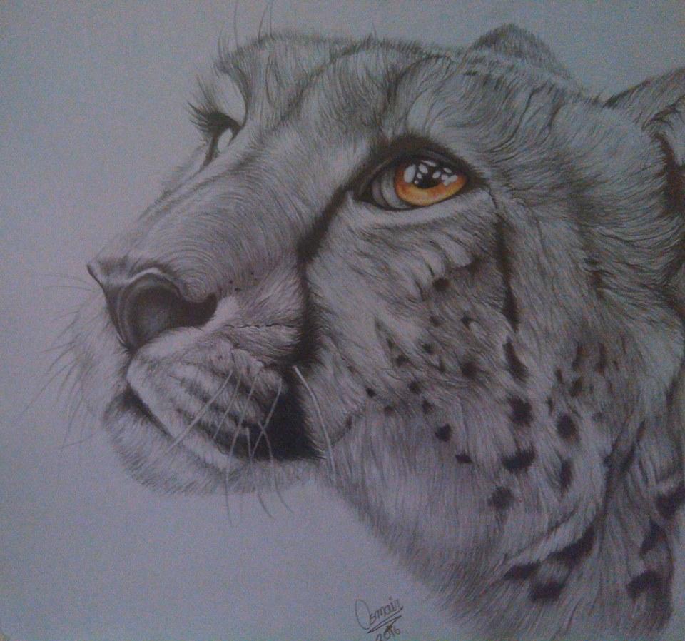 Cheetah hand drawn