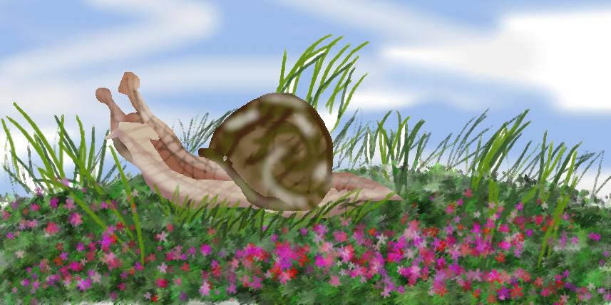 A Snail?