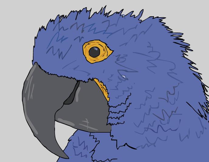 Parrot...