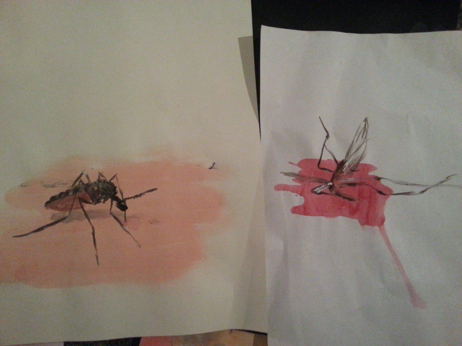 Mosquito where he belongs