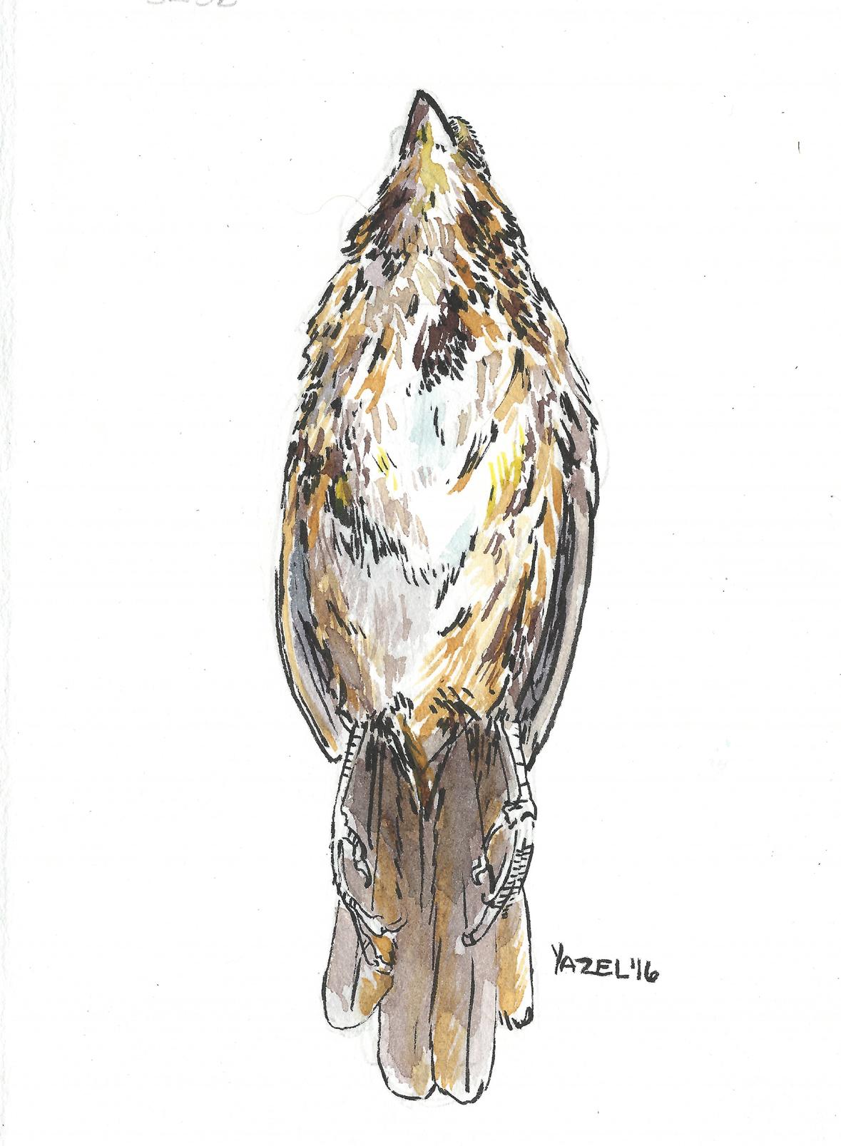 Dead Bird 003