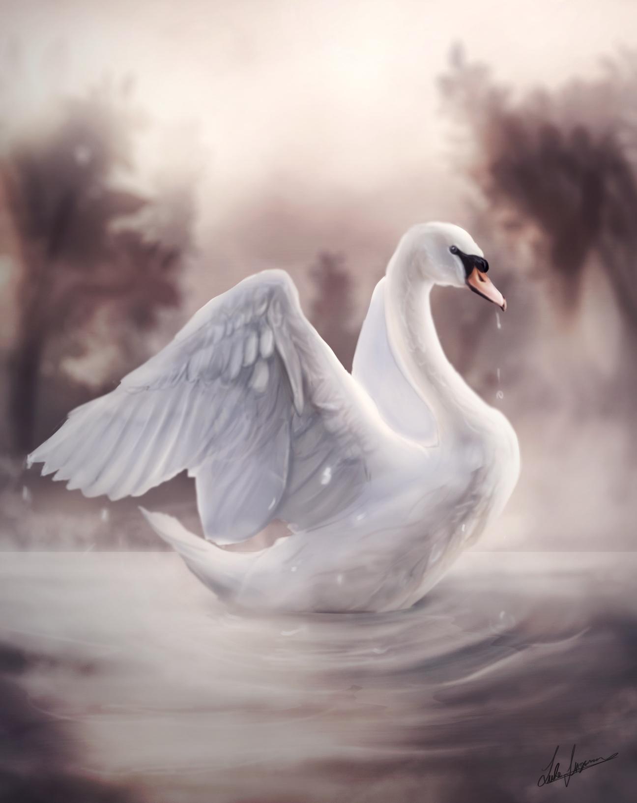 Swan Lake - (Daily Draw - 25)
