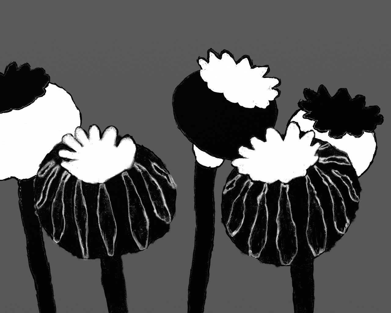 Poppies, black and white