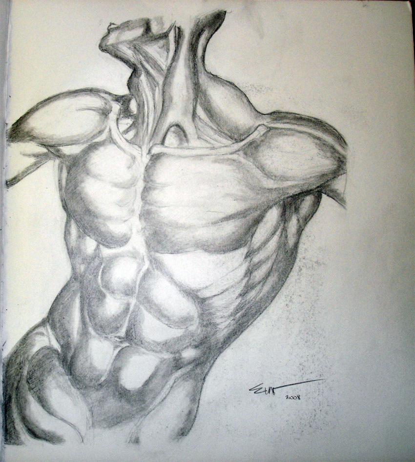Hogarth Anatomy Drawing