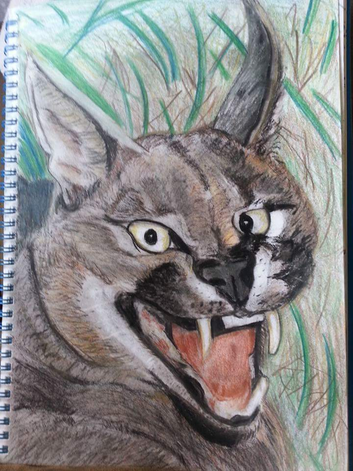 Lynx by April Phelps