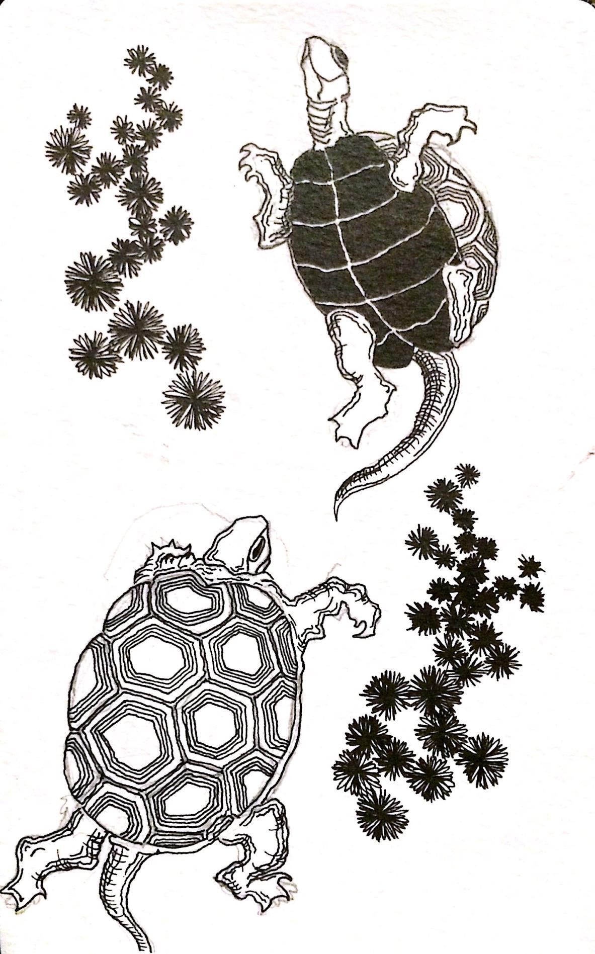 Hokusai's Turtles