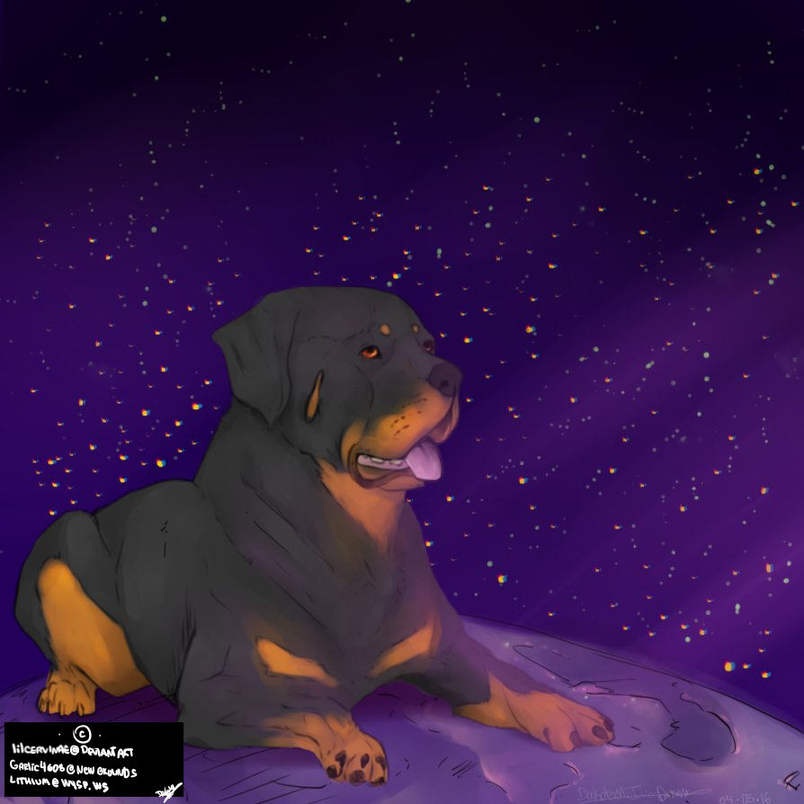 Pupper on the Moon