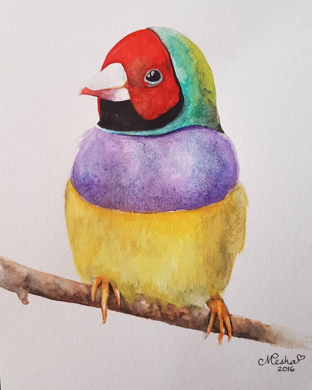 Red-Headed Gouldian Finch