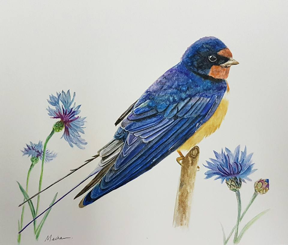 Barn swallow with cornflowers
