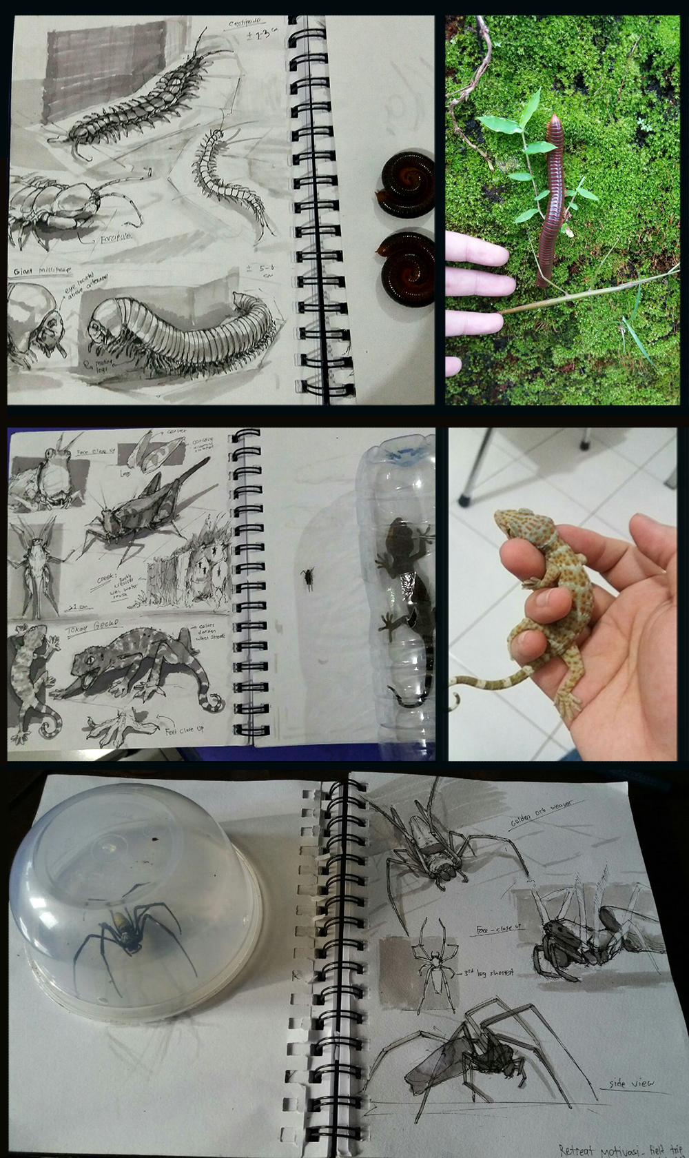 Field Trip Sketches