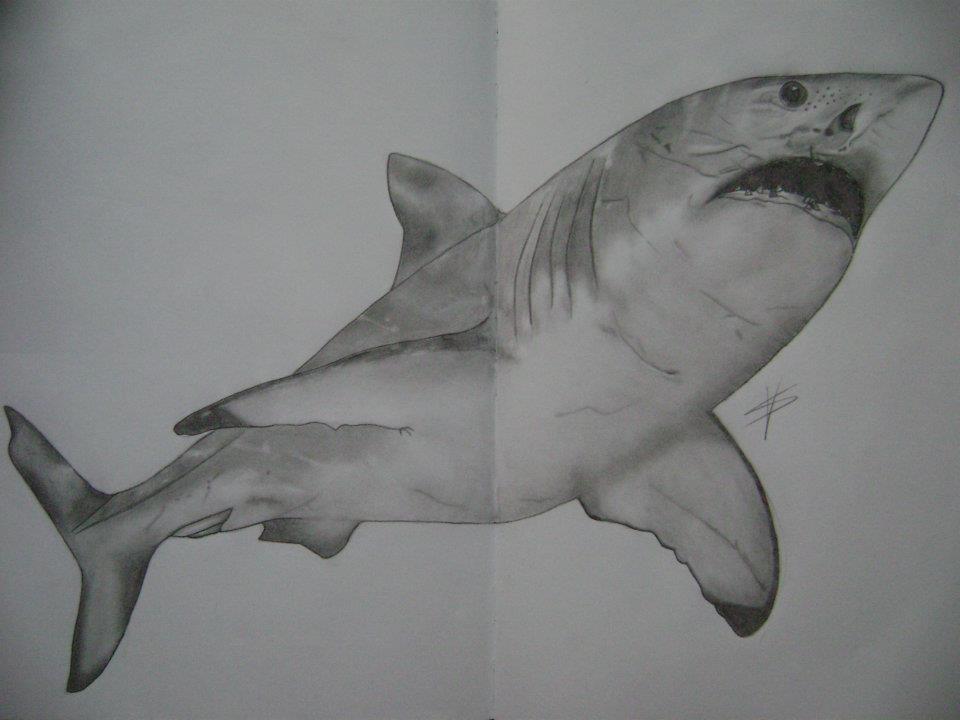 Jaws...tudutudutudu!!! imagine music
