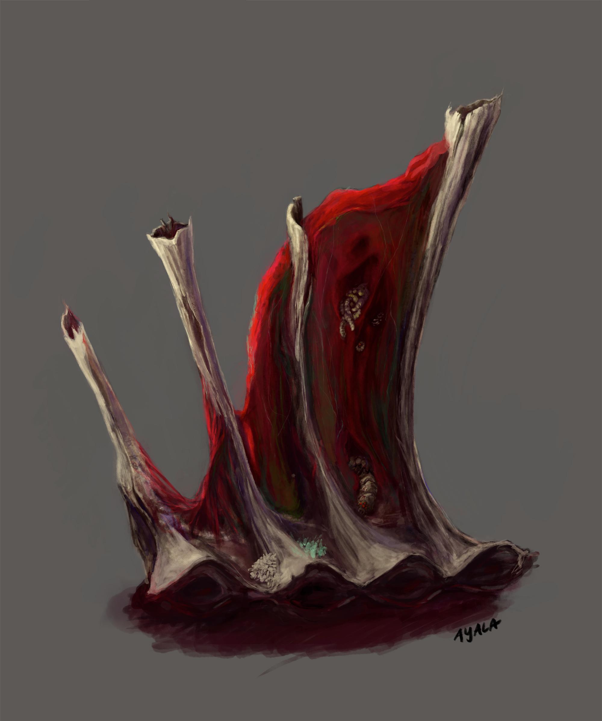 Carcass Study