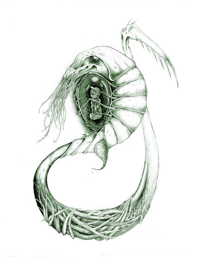 Mother Shrimp