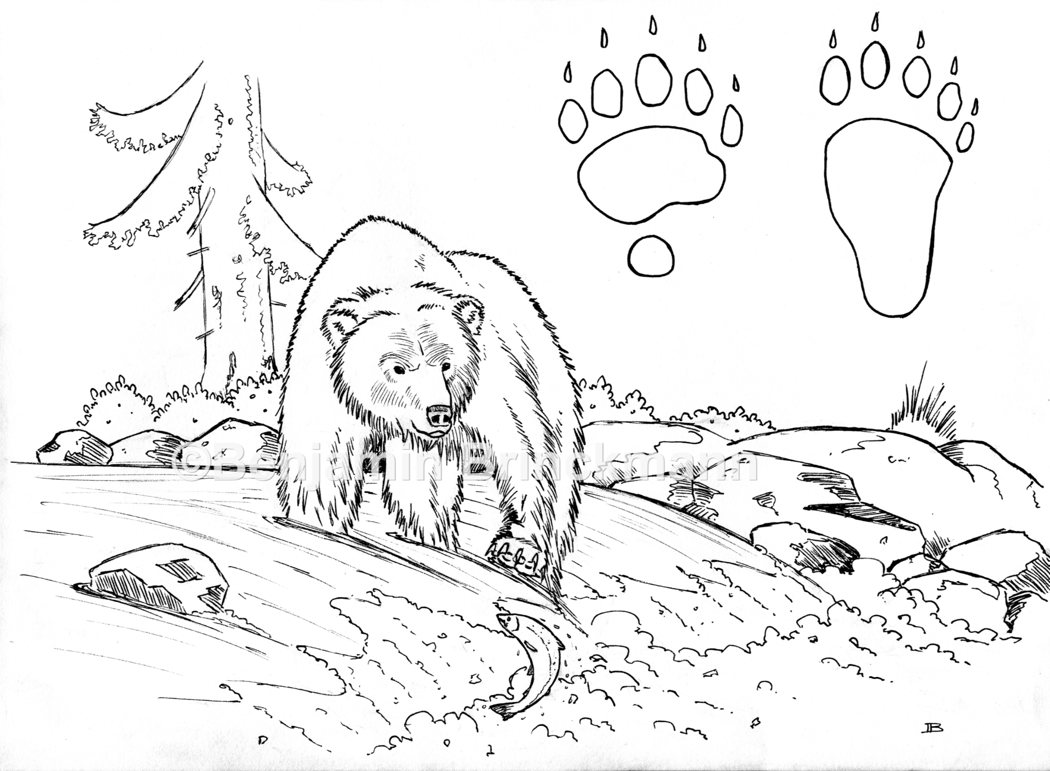 Bear Colouring Page by BBrinckmann on Newgrounds