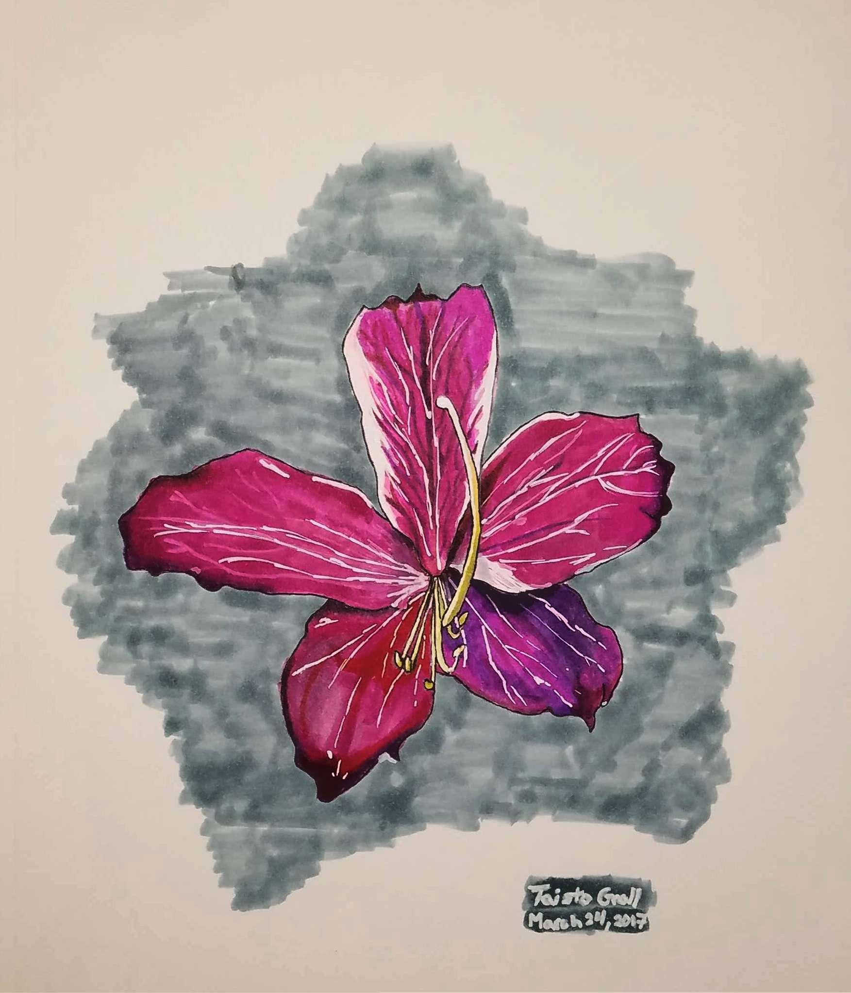 Hongkong Orchid