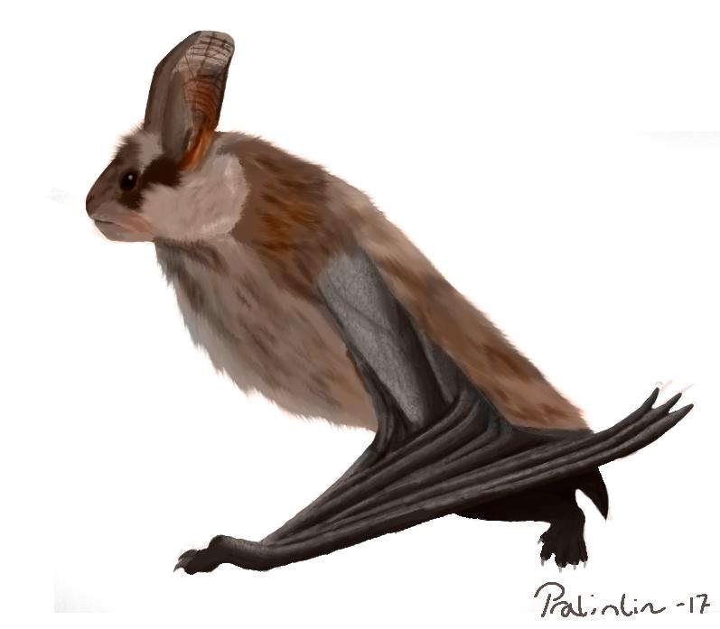 Human/bat -hybrid