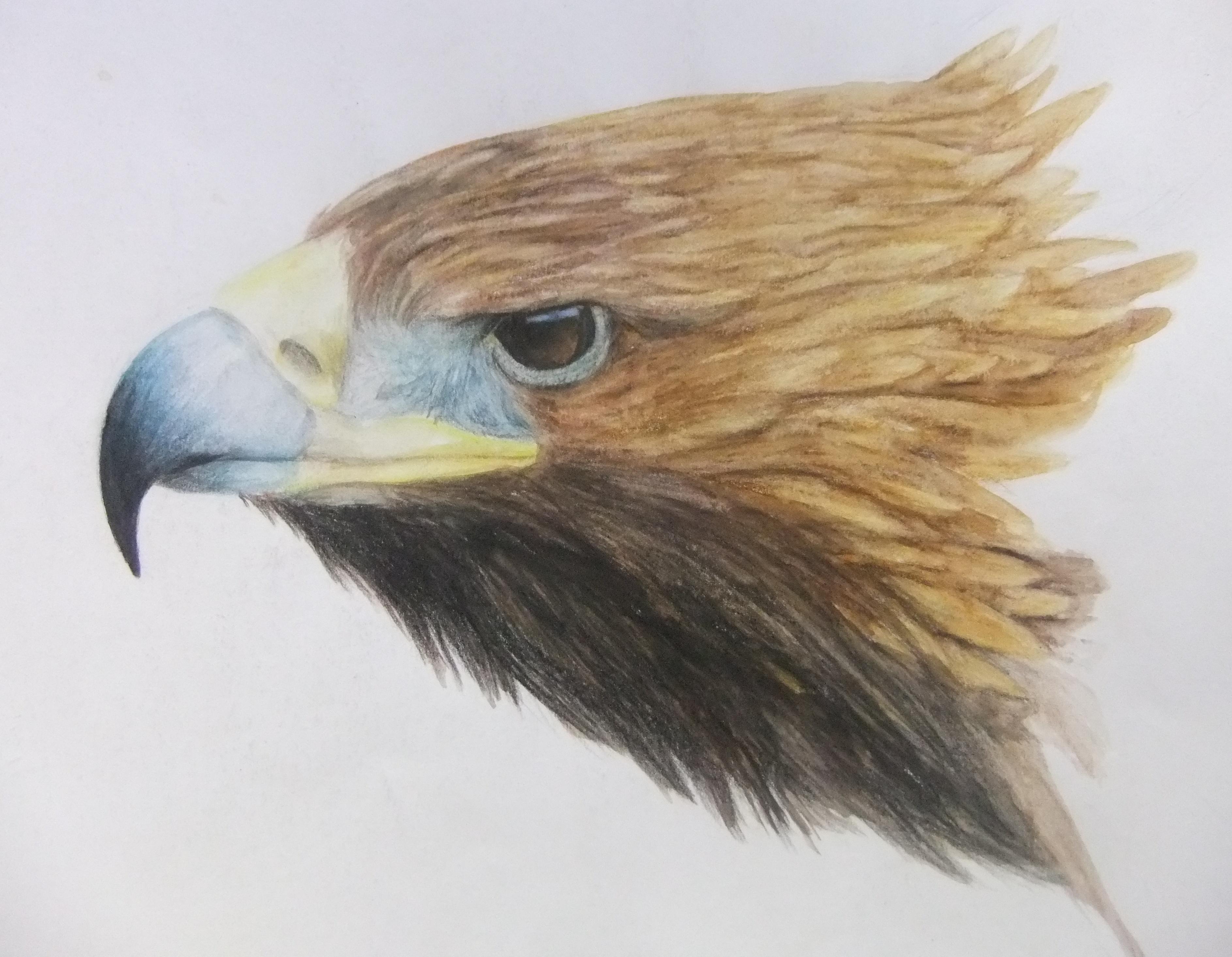 Eagle profile watercolor