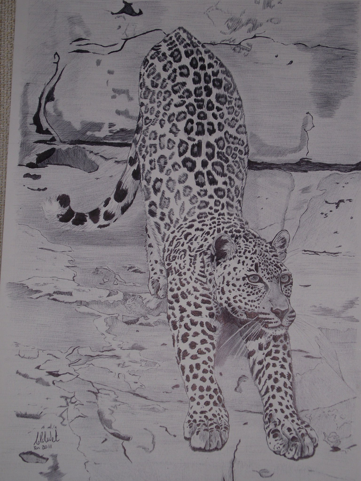 stretchy Leopard