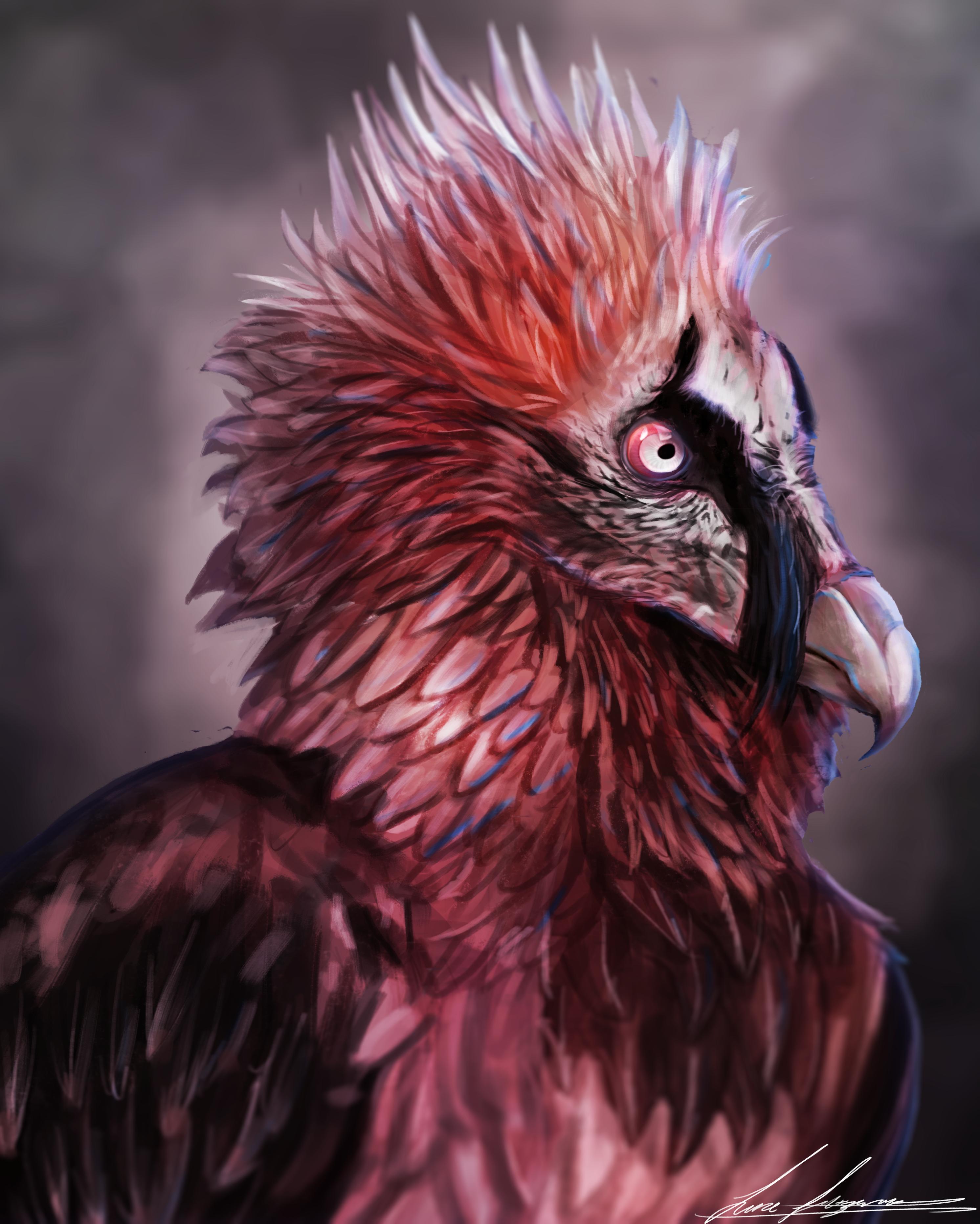 Bearded Vulture by LukeF on Newgrounds
