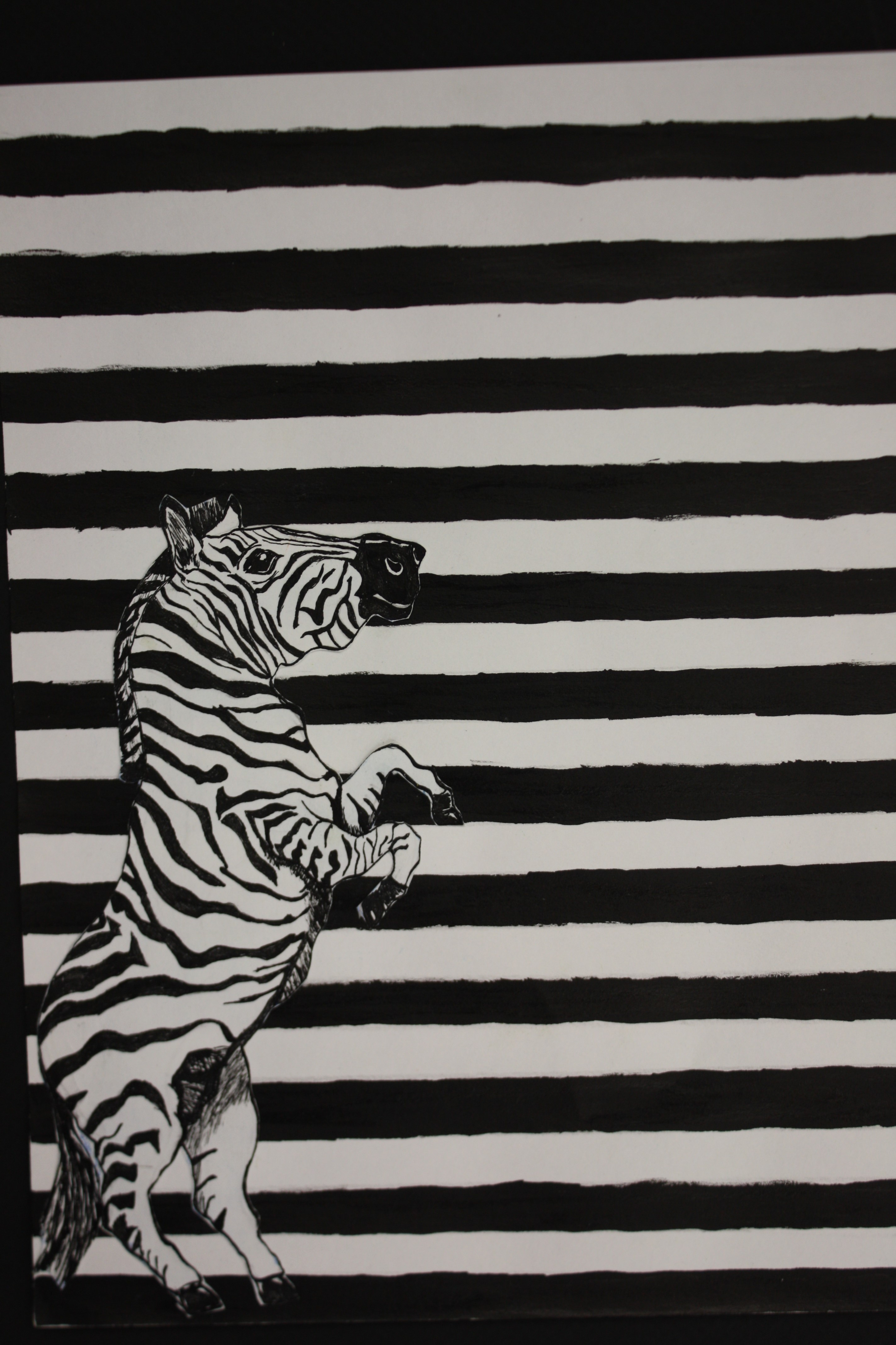 zebra in the stripes