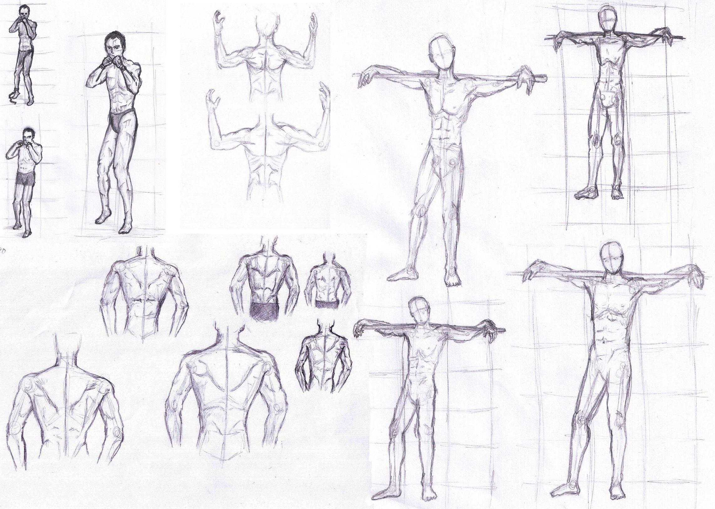 Anatomy Practice Vol. 1
