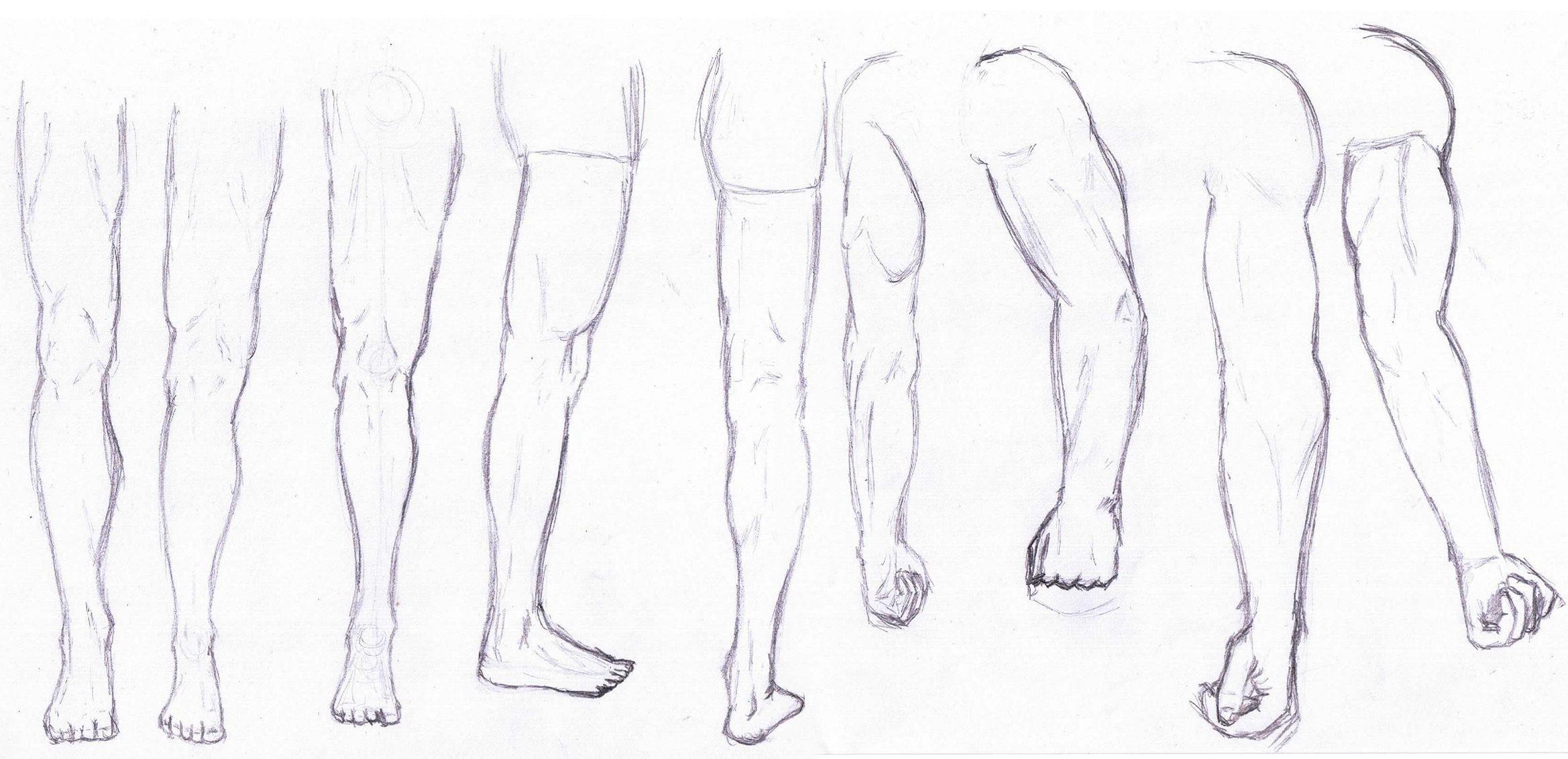 Anatomy Practice Vol. 2