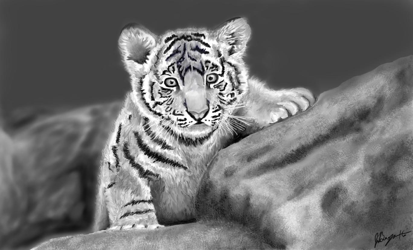 Baby Tiger Final