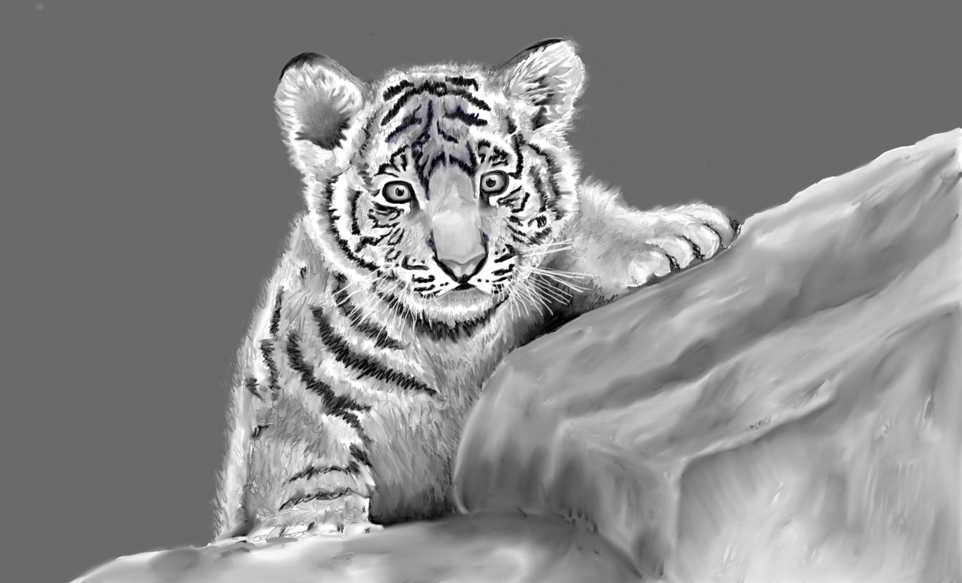 Baby Tiger 4