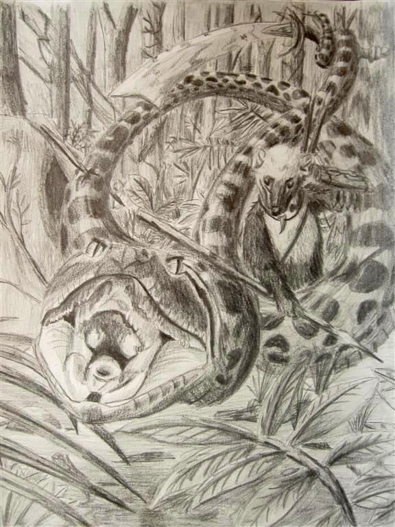 Anaconda Hunter