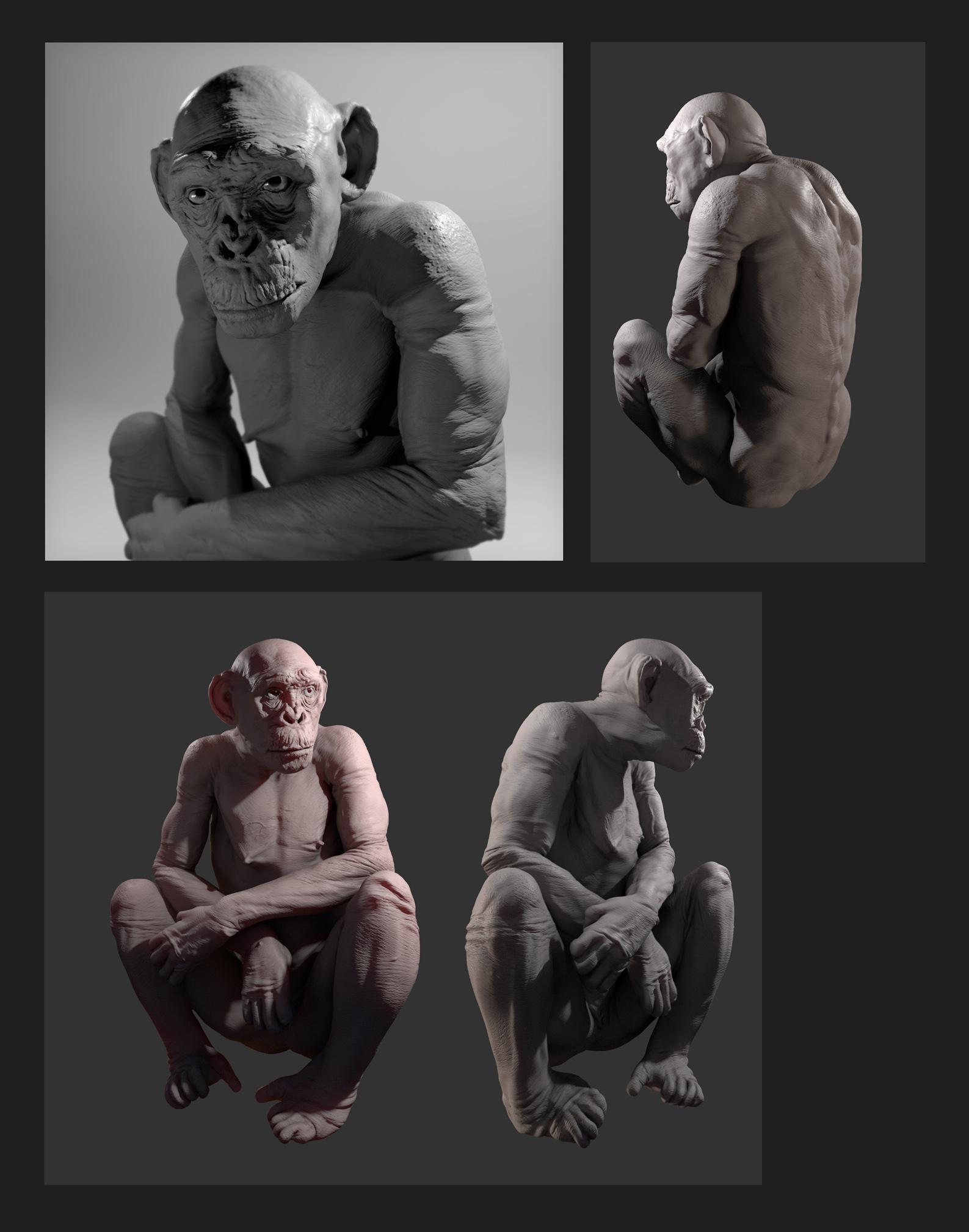 Hairless Chimp
