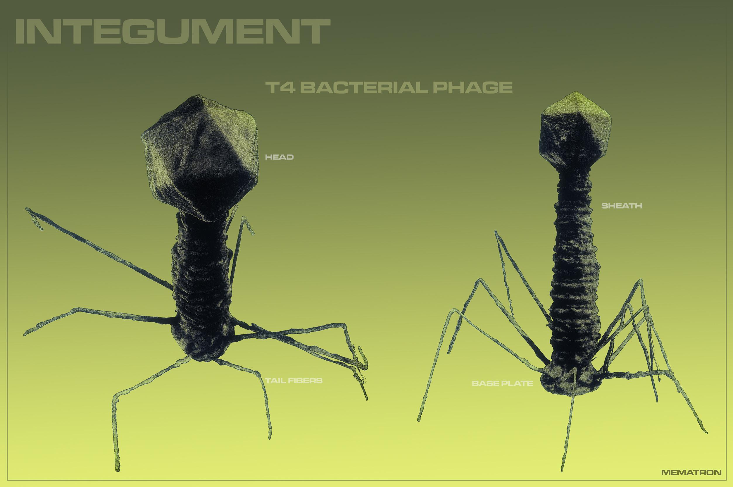 T4 Bacterial Phage
