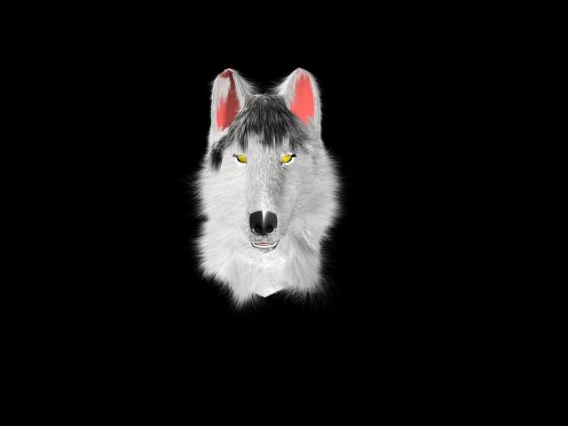 Wolf head?!