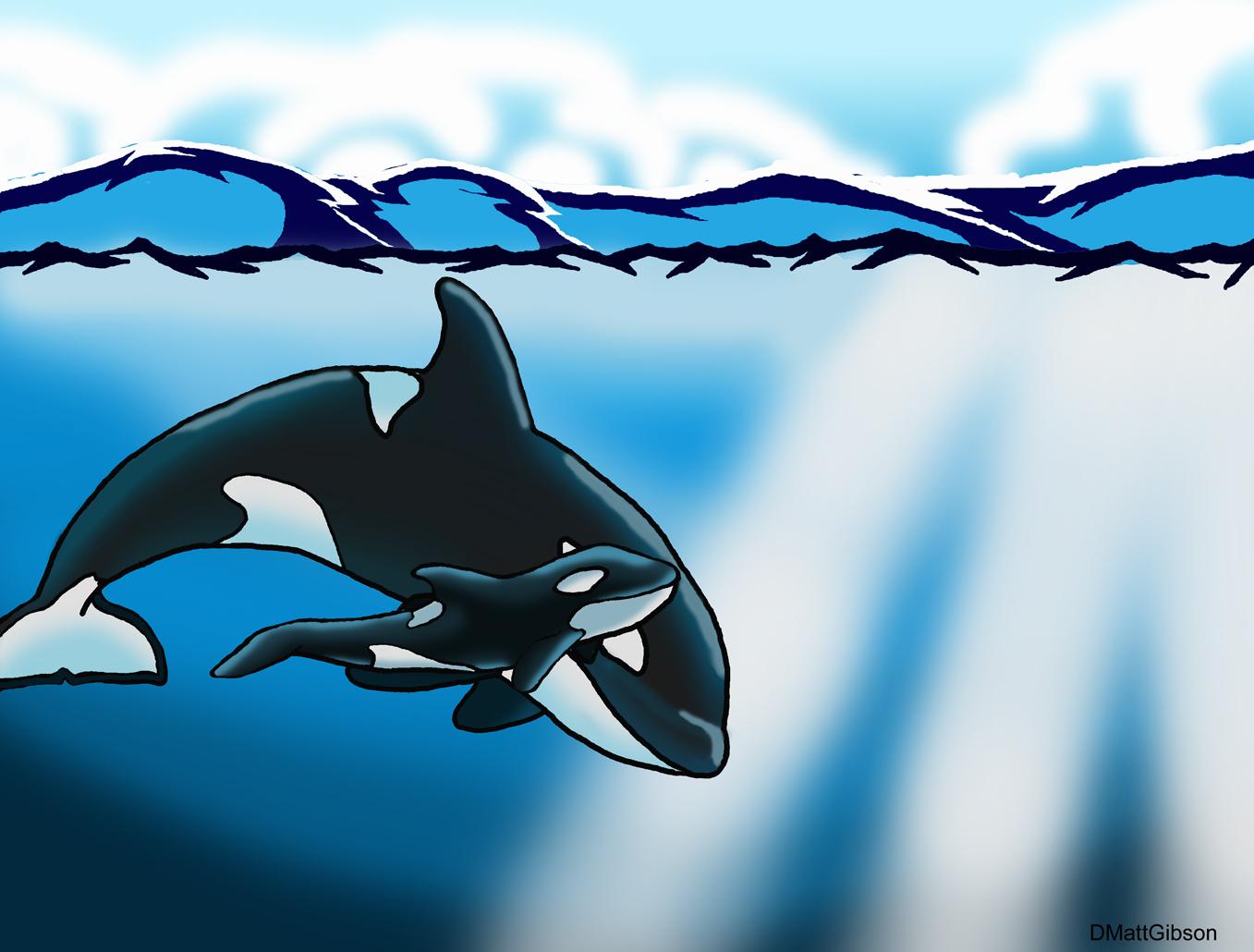 Open ocean whales