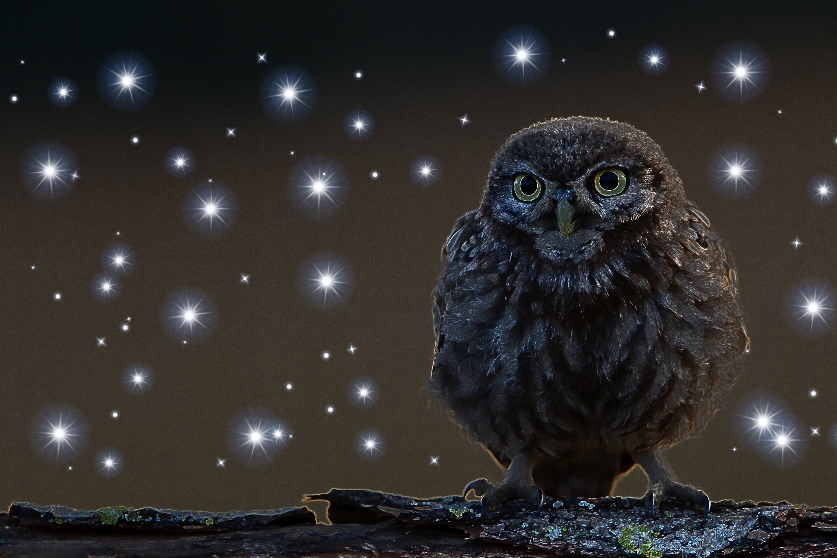 Owl and Stars