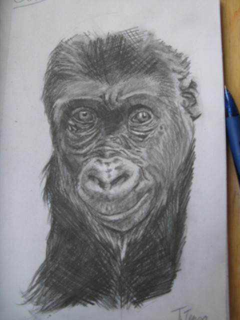 gorilla :O