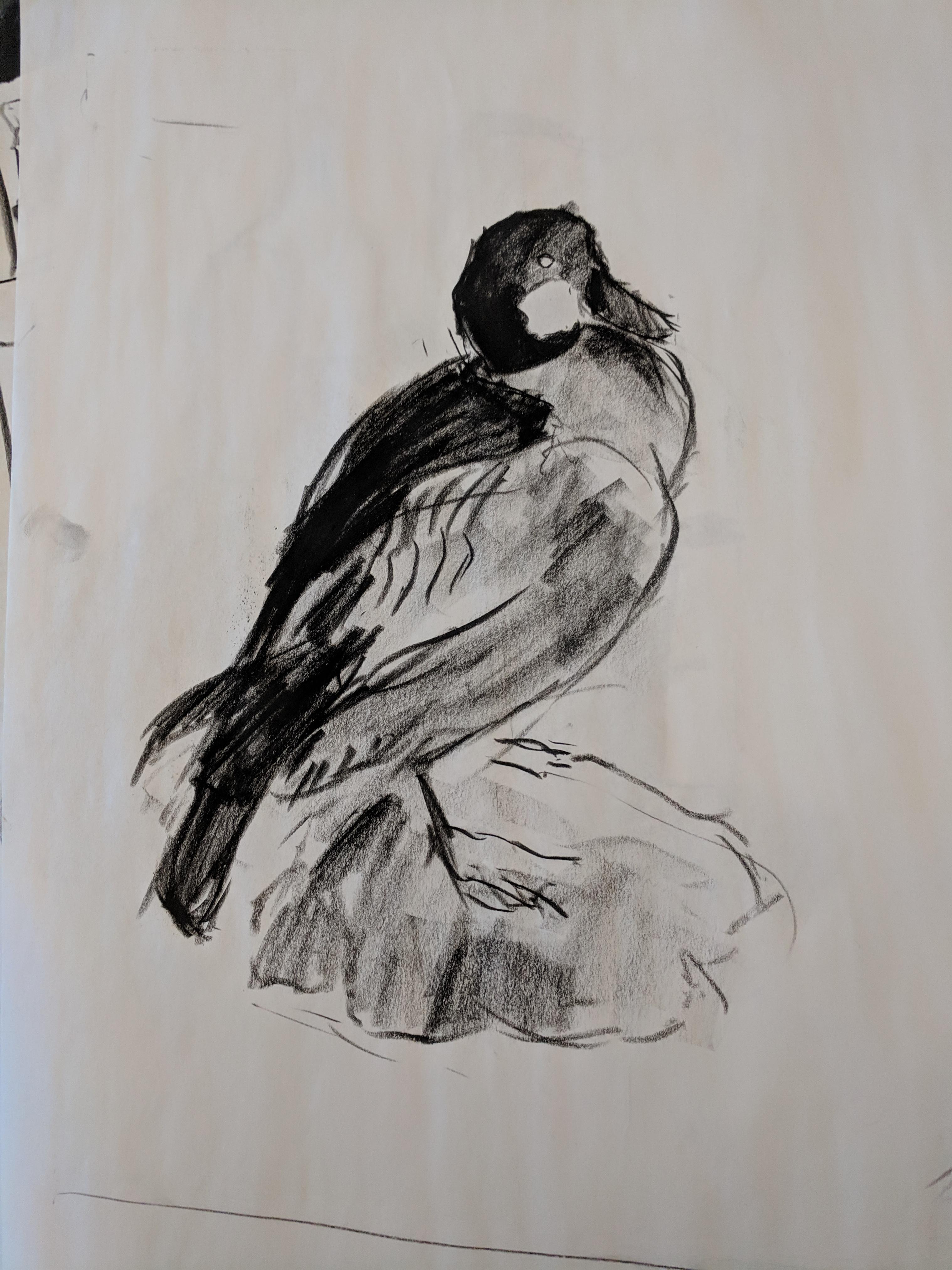 Duck Gesture Drawing