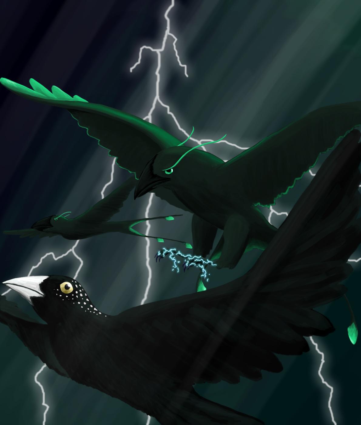 Storm Finch