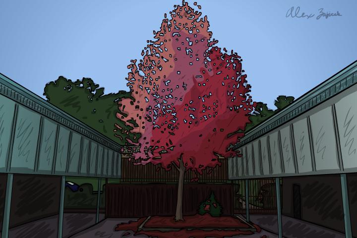Flame Tree