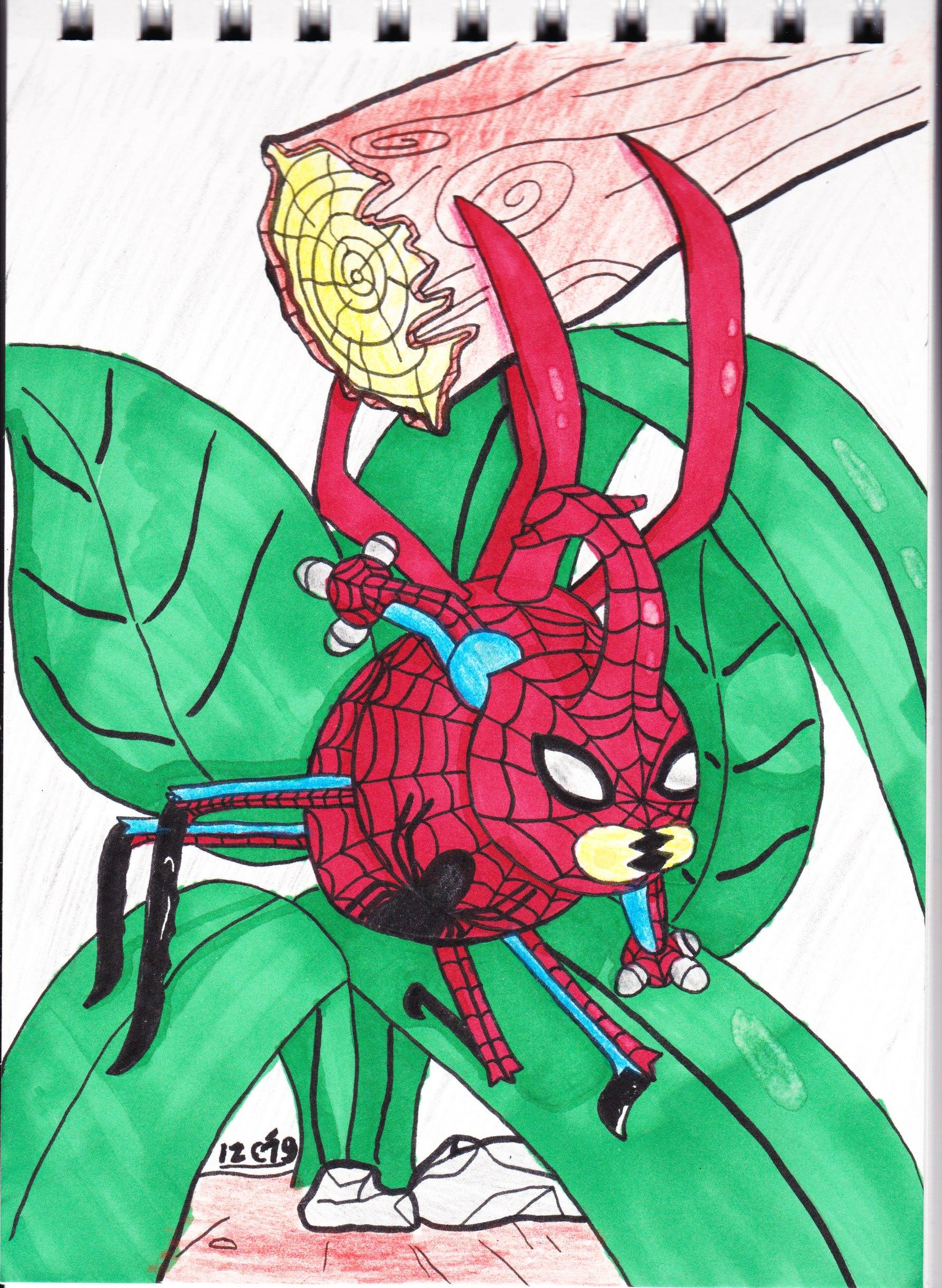 Spider Bettle