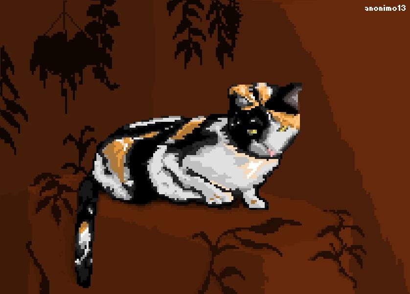 Rural Cat