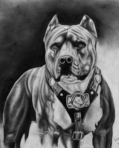 Pitbull By Rickygonza On Newgrounds