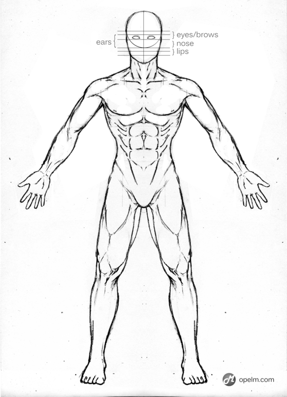Male Anatomy Front Reference by Blud-Shot on Newgrounds