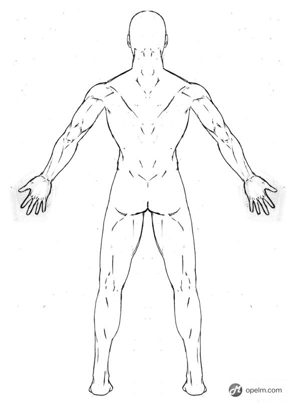 Male Anatomy Back Reference by Blud-Shot on Newgrounds