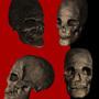 Skull (z-brush)
