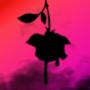 Leaking rose