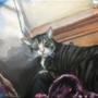 My Cat Acrylics on Canvas